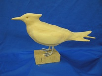 royal tern with feet 16""